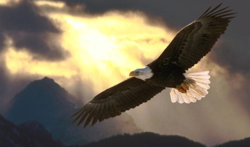 Wings like Eagles.